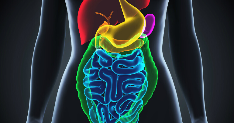 Human gastrointestinal tract - Gillespie Approach–Craniosacral Fascial Therapy